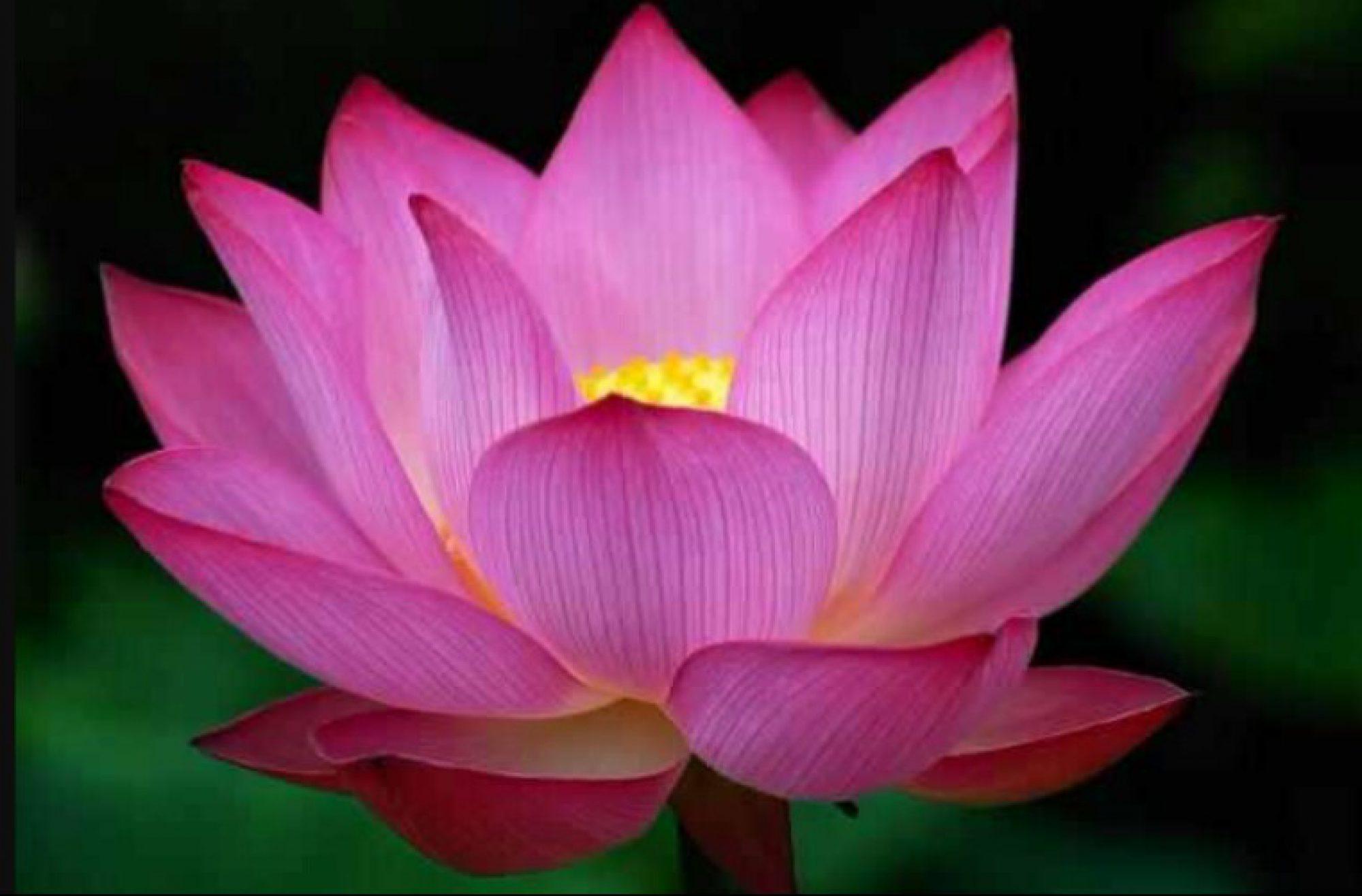 Goddess Aakasha| Soul Alchemy
