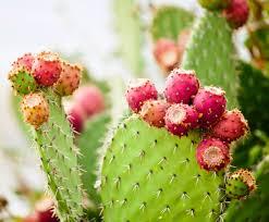 Cactus Water 😮