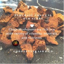 Chaga Mushroom For Optimal Health